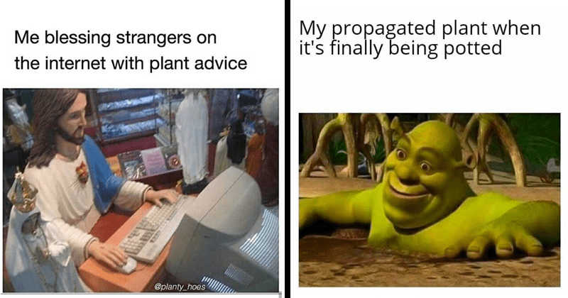 Funny memes, house plants, house plant memes, dank memes, stupid memes, relatable memes, houseplant memes | jesus using a computer blessing strangers on internet with plant advice @planty_hoes EXEP | My propagated plant s finally being potted Shrek in a mud bath