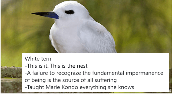 Funny Reviews About The Nesting Styles Of Different Birds | White tern -This is it. This is the nest -A failure to recognize the fundamental impermanence of being is the source of all suffering -Taught Marie Kondo everything she knows