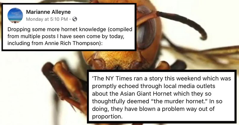 "Interesting Facebook thread explaining why the threat of ""murder hornets"" is largely sensationalized 