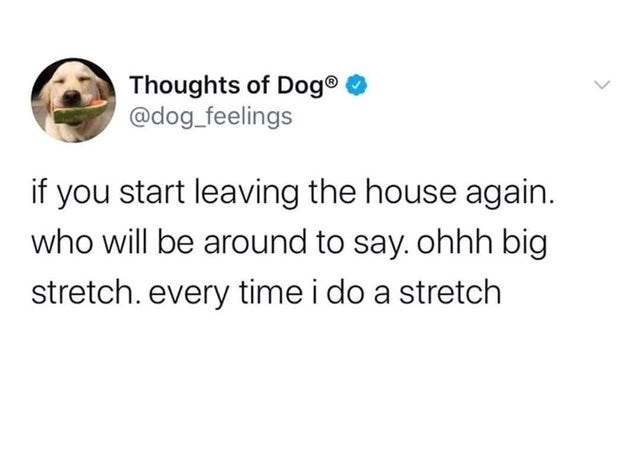 collection of funny and random tweets |Animal - Thoughts Dog dog_feelings if start leaving house again. who will be around say. ohhh big stretch. every time do stretch