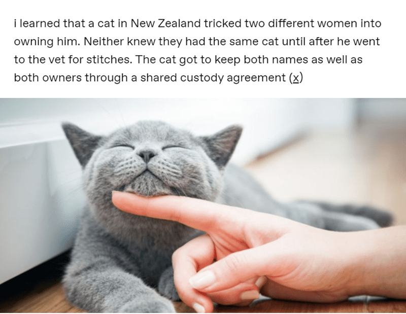 Amazing animal stories | learned cat New Zealand tricked two different women into owning him. Neither knew they had same cat until after he went vet stitches cat got keep both names as well as both owners through shared custody agreement (x)