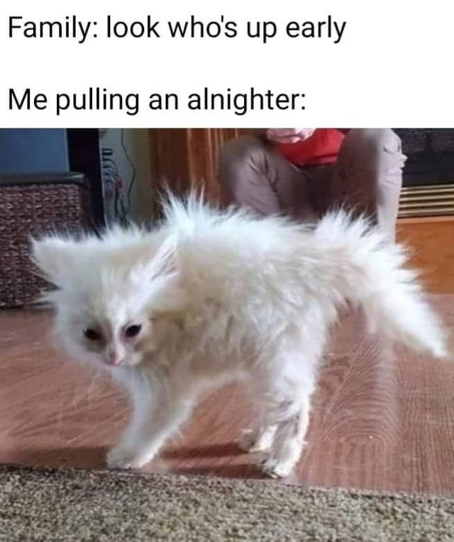top ten 10 memes daily | Family: look who's up early pulling an all nighter: very frazzled looking white kitten with its fur messy and standing in all directions