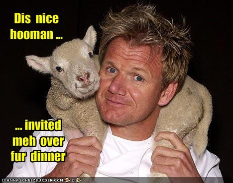 bad tv gordon ramsay TV - 1141590784