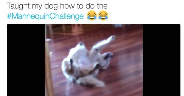 dogs twitter mannequin challenge funny - 1141765