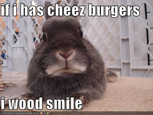 Cheezburger Image 1142038784