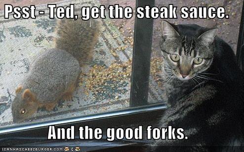 forks lolcats lolsquirrel lolsquirrels murder nom nom nom psst sauce squirrel - 1142049024