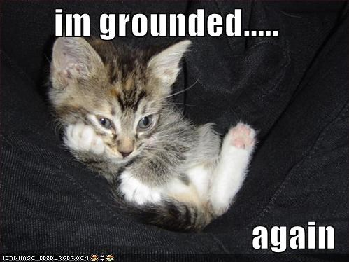 again cute grounded kitten lolcats lolkittehs Sad - 1142187264