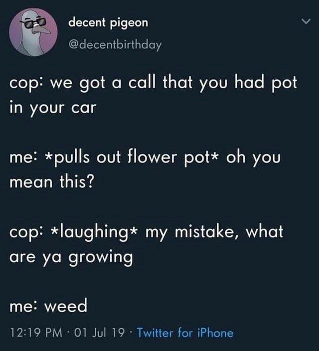 top ten daily tweets from black twitter | Animal - decent pigeon @decentbirthday cop got call had pot car pulls out flower pot* oh mean this? cop laughing* my mistake are ya growing weed 12:19 PM 01 Jul 19 Twitter iPhone