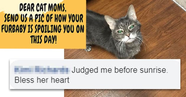 cats mothers day funny lol aww cute adorable moms | BROUGHT US BREAKFAST! DEAR CAT MOMS, SEND US PIC FURBABY IS SPOILING ON THIS DAY! | Kimi Richards Judged before sunrise. Bless her heart 27 Like Reply 1d