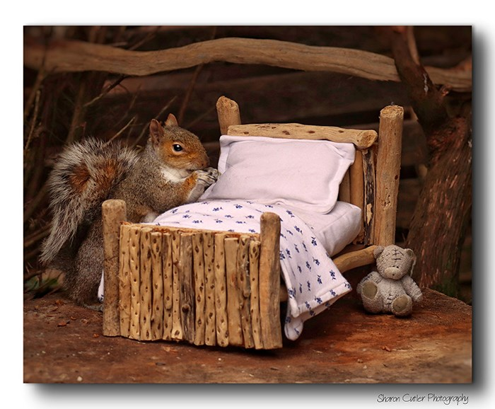 squirrel bedroom photography art animals photoshoot bathroom awesome wildlife | cute squirrel standing beside a tiny miniature bed frame made from wooden sticks and little bed sheets