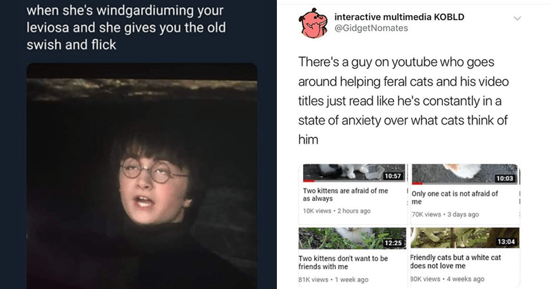 Funny random memes, spicy memes, funny tweets, random memes | Harry Potter she's windgardiuming leviosa and she gives old swish and flick | interactive multimedia KOBLD @GidgetNomates There's guy on youtube who goes around helping feral cats and his video titles just read like he's constantly state anxiety over cats think him 10:57 10:03 Two kittens are afraid as always Only one cat is not afraid 10K views 2 hours ago 70K views 3 days ago 12:25 13:04 Two kittens don't want be friends with Friend