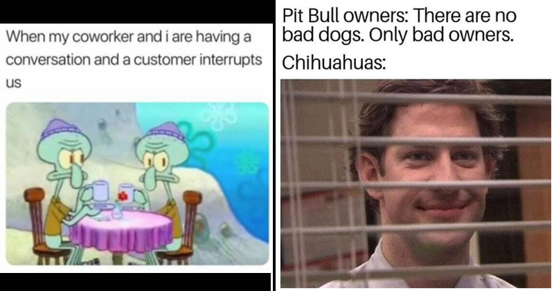Funny random memes | Squidward having drinks with himself my coworker and are having conversation and customer interrupts us | Jim Halpert Pit Bull owners: There are no bad dogs. Only bad owners. Chihuahuas: