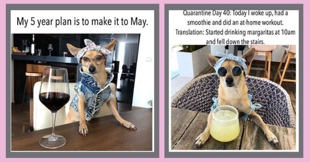 influencer dogs Instagram quarantine model satire pets dog wine alcohol | dog in glasses and a head scarf My 5 year plan is make May. | Quarantine Day 40: Today woke up, had smoothie and did an at-home workout. Translation: Started drinking margaritas at 10am and fell down stairs.