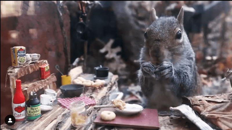 Photographer Takes Slow Motion Video Snippets Of The Squirrels Living In Her Backyard | very cute adorable squirrel nibbling on food at a tiny kitchen table with miniature condiments and kitchenware