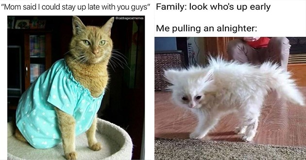 caturday funny cat memes lol cats aww cute animals | cat wearing a nightgown Mom said could stay up late with guys cabbagecatmemes | Family: look who's up early pulling an alnighter: white kitten with fur sticking out messily