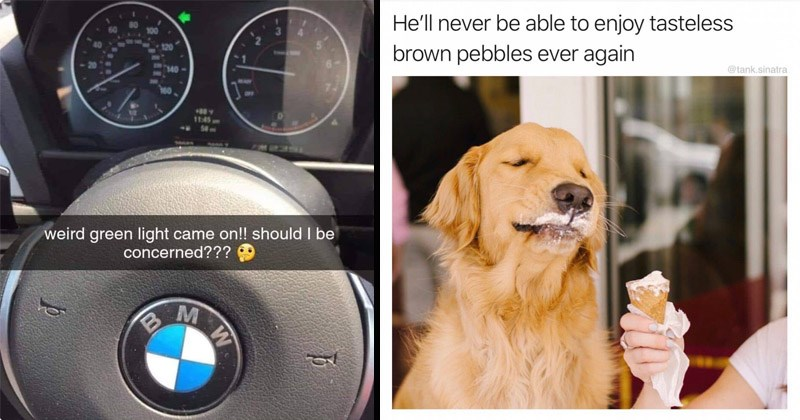 Funny random memes | weird green light came on should be concerned BMW car blinker arrow | dog eating ice cream He'll never be able enjoy tasteless brown pebbles ever again @tank.sinatra