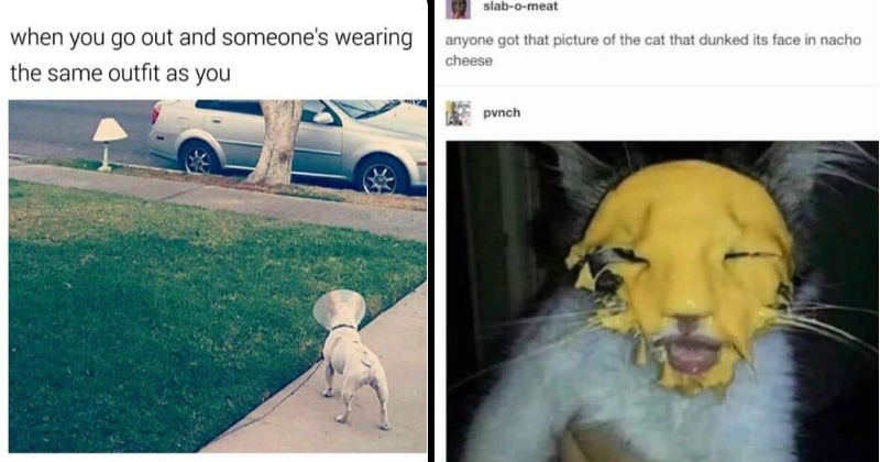 Funny and weird animal memes and moments | go out and someone's wearing same outfit as white dog wearing a cone around its neck looking at a lamp | slab-o-meat anyone got picture cat dunked its face nacho cheese punch