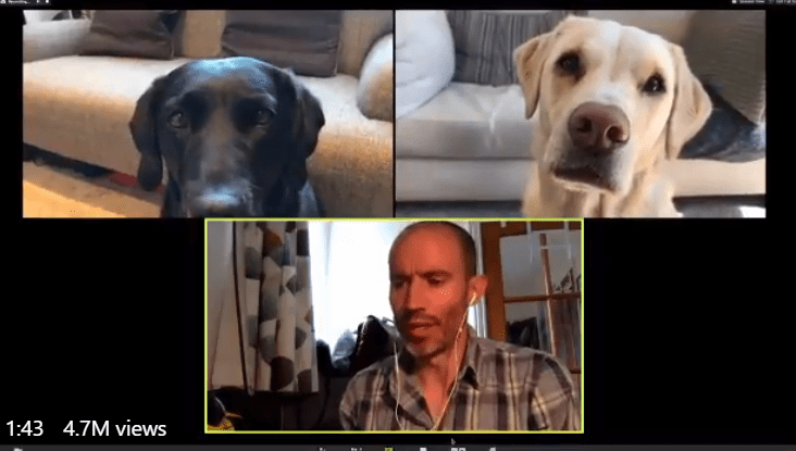 Guy Holds Zoom Meeting With His Dogs | zoom call between a man and two labrador dogs all in separate thumbnails