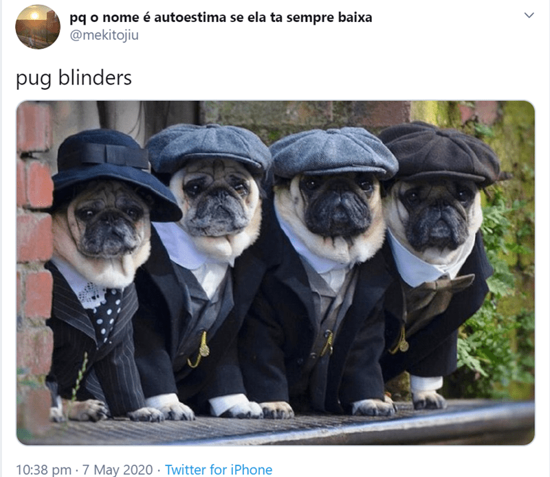 Funny tweets about pugs | pq o nome autoestima se ela ta sempre baixa @mekitojiu pug blinders 10:38 pm 7 May 2020 Twitter iPhone > pug dogs in suits and newsboy caps