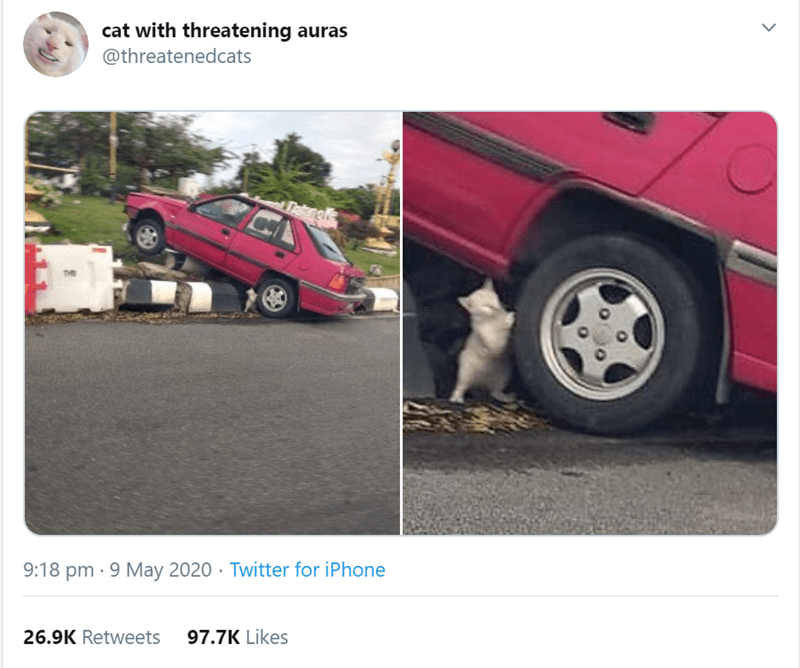 Funniest animal tweets | cat with threatening auras @threatenedcats Deknel 9:18 pm 9 May 2020 Twitter iPhone 26.9K Retweets 97.7K Likes > tiny kitten who appears to be holding up a car in the air by its wheel