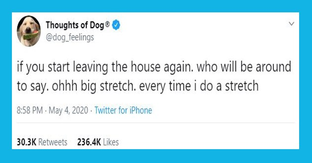 dog doggo thoughts tweets animal funny lol cute wholesome aww twitter | Thoughts Dog dog_feelings if start leaving house again. who will be around say. ohhh big stretch. every time do stretch 8:58 PM May 4, 2020 Twitter iPhone 30.3K Retweets 236.4K Likes