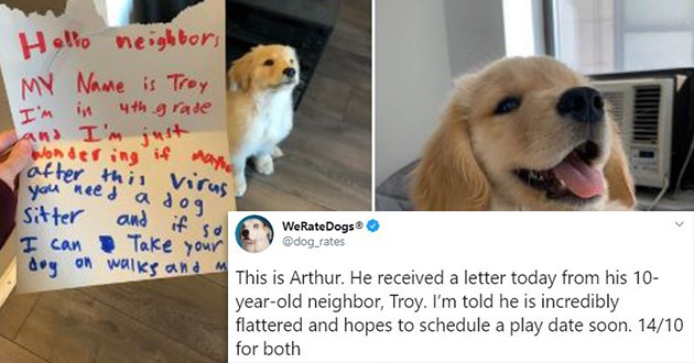 doggo dog rating tweets dogs animals aww cute funny wholesome animal twitter | WeRateDogs dog_rates This is Arthur. He received letter today his 10- year-old neighbor, Troy told he is incredibly flattered and hopes schedule play date soon Hello neighbor MY Name is Troy 4th grade and just wondering if maybe after this virus need dog Sitter can take dog on walks