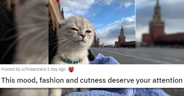 cats reddit cute funny mourning loss aww animals medley | This mood, fashion and cuteness deserve your attention pretty grey cat wearing a necklace in front of a European castle