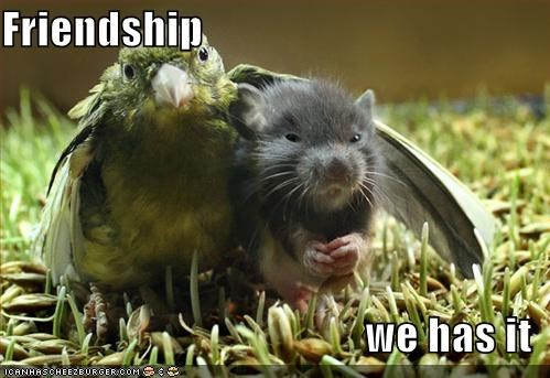 bird,cute,friendship,lolbird,lolbirds,lolmice,lolmouse,mouse