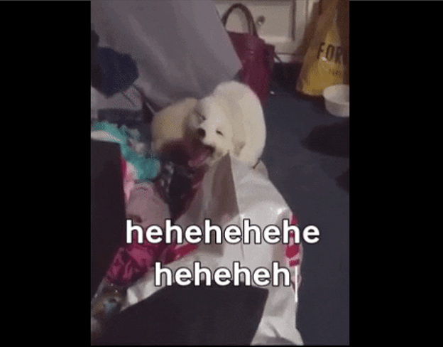 animal laughing gifs cute happy animals that look as if they're laughing and smiling seagull owl monkey white fox rolling on the ground hehehe haha