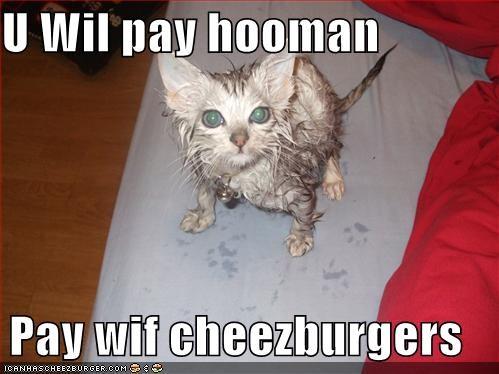 Cheezburger Image 1148530944