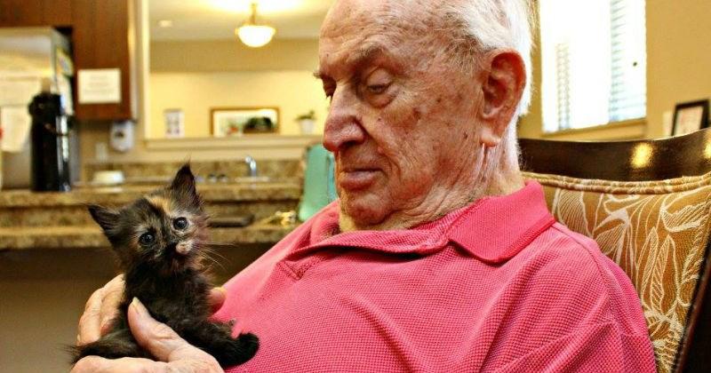 seniors kitten retired rescue - 1148677