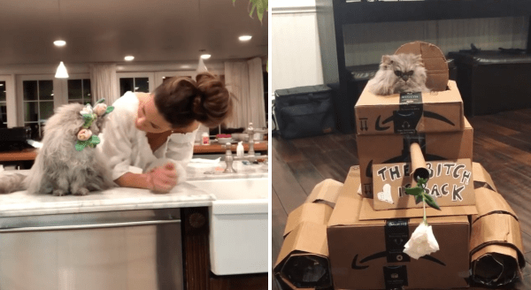 Kate Beckinsale Is Having Fun At Home With Her Two Cats, Clive And Willow | woman leaning over a counter looking at a furry fuzzy cat with a flower crown on its head | cat peeking out from an army tank made of cardboard
