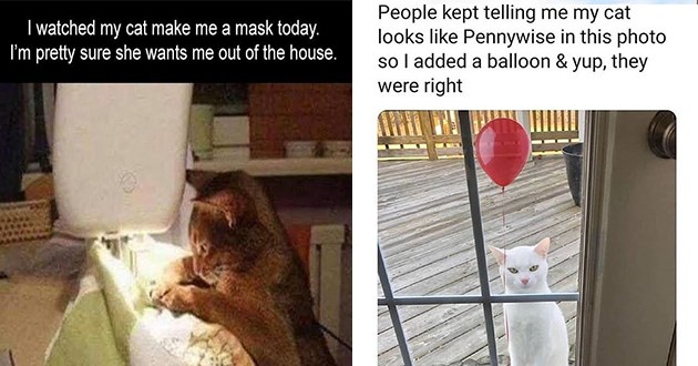 cats funny memes lol cute aww pics vids animals | cat using a sewing machine watched my cat make mask today pretty sure she wants out house. | People kept telling my cat looks like Pennywise this photo so added balloon yup, they were right evil white cat with a red balloon