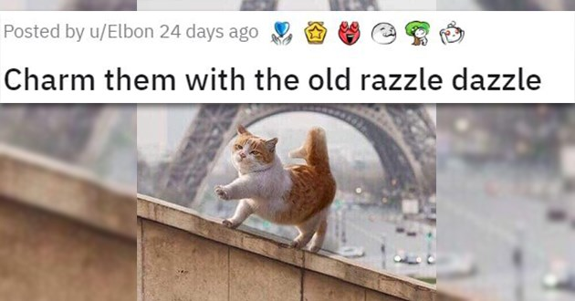 happy carefree animals cute funny lol aww pics | Charm them with the old razzle dazzle adorable chonky orange and white cat walking marching on a fence with the Eiffel tower in the background