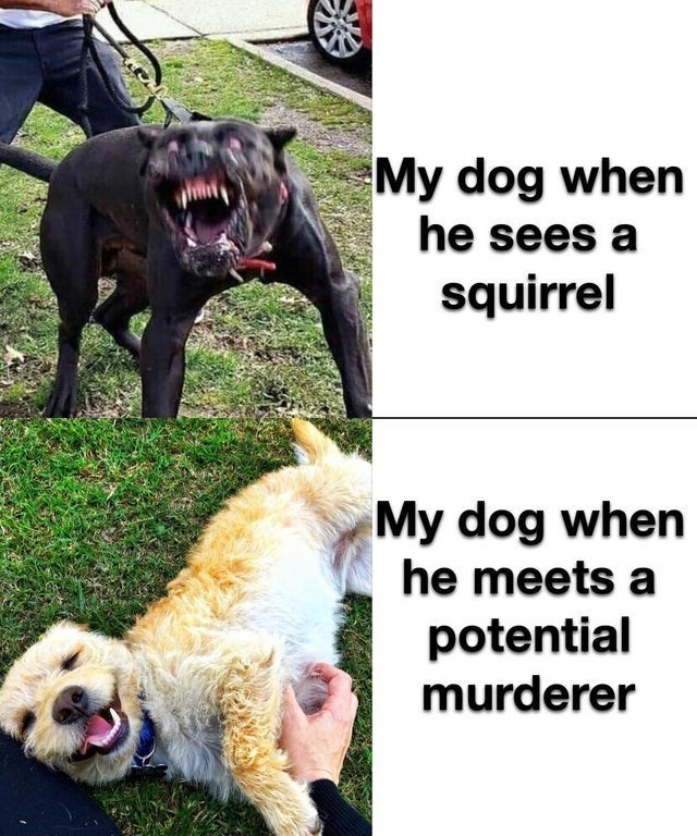 top ten 10 memes daily | My dog he sees squirrel My dog he meets potential murderer angry barking dog vs cute playful dog