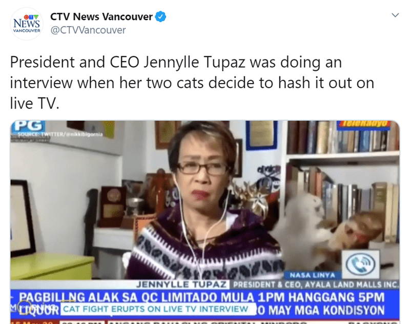 Woman Deals With An Epic Fight Of Her Two Cats During Live TV Interview | CTV News Vancouver NEWS @CTVVancouver VANCOUVER President and CEO Jennylle Tupaz doing an interview her two cats decide hash out on live TV. PG SOURCE TWITTER/@nikkibigornia NASA LINYA JENNYLLE TUPAZ PRESIDENT CEO, AYALA LAND MALLS INC. PAGBILLNG ALAK SA OC LIMITADO MULA 1PM HANGGANG 5PM METGUOR CAT FIGHT ERUPTS ON LIVE TV INTERVIEW O MAY MGA KONDISYON >