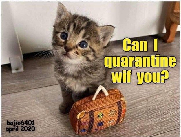 lolcats cats funny memes cute lol aww animals | tiny adorable kitten looking up pleadingly with blue eyes next to a miniature suitcase Can quarantine wif bajio6401 april 2020