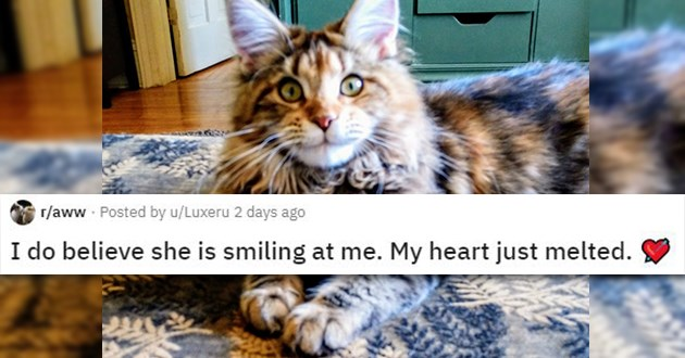 cats dogs smile smiling cute aww adorable animals reddit | r/aww Posted by u/Luxeru I do believe she is smiling at me. My heart just melted furry fuzzy cat with long fur