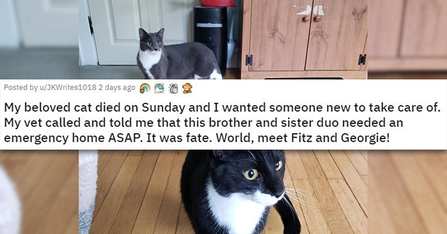 adopt adopted cats dogs animals shelter rescue aww cute love wholesome uplifting | My beloved cat died on Sunday and I wanted someone new to take care of My vet called and told me that this brother and sister duo needed an emergency home ASAP. It was fate. World, meet Fitz and Georgie