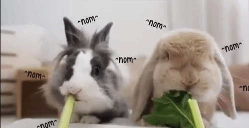 adorable gifs of different animals samoyed dog pig under blanket two kittens rabbit bunny and hippo hippopotamus eating in cute and funny ways nom nom nom
