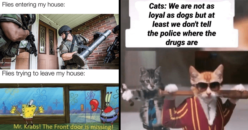 Funny random memes, relatable memes, dank memes, stupid memes, funny memes, spongebob memes, dank memes | Flies entering my house: Flies trying leave my house: Mr. Krabs Front door is missing! SWAT team Spongebob | Cats are not as loyal as dogs but at least don't tell police where drugs are
