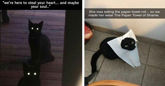 black cats memes funny lol cute aww animals | two black cats in the dark with their eyes glowing here steal heart and maybe soul | She eating paper towel roll so made her wear Paper Towel Shame.