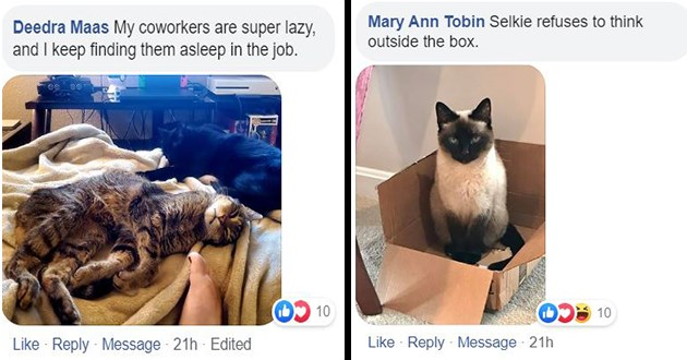 ichc challenge pets home working funny lol cute aww animals facebook | Deedra Maas My coworkers are super lazy, and keep finding them asleep job | Mary Ann Tobin Selkie refuses think outside box.