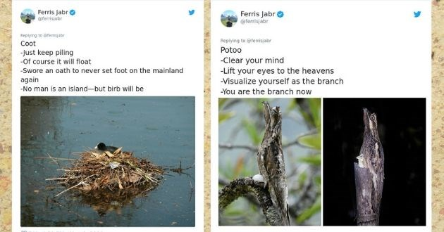 birds nest review hilarious twitter nature | Ferris Jabr @ferrisjabr Replying ferrisjabr Coot -Just keep piling course will float -Swore an oath never set foot on mainland again -No man is an island-but birb will be O741 4:50 PM May 8, 2020 70 | Potoo -Clear mind -Lift eyes heavens -Visualize yourself as branch are branch now O747 4:51 PM May 8, 2020 79 people are talking about this