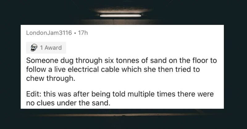 Escape room employees describe the weirdest stuff they've seen | LondonJam3116 17h 1 Award Someone dug through six tonnes sand on floor follow live electrical cable which she then tried chew through. Edit: this after being told multiple times there were no clues under sand.