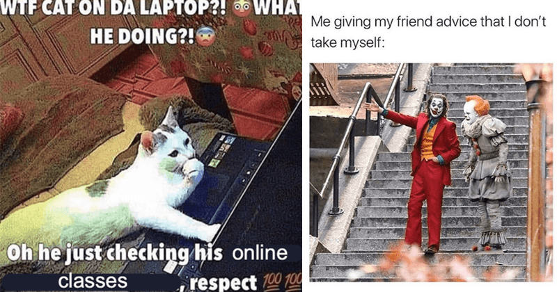 Funny random memes, cat memes, dank memes, relatable memes, stupid memes, funny tweets | WTF CAT ON DA LAPTOP HE DOING Oh he just checking his online classes respect 100 100 | Don B BDonna_12 giving my friend advice don't take myself: The Joker and Pennywise