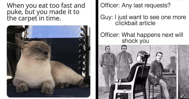 Funny random memes, dank memes, relatable memes | cat looking pleased with itself eat too fast and puke, but made carpet time. | Officer: Any last requests? Guy just want see one more clickbait article Officer happens next will shock