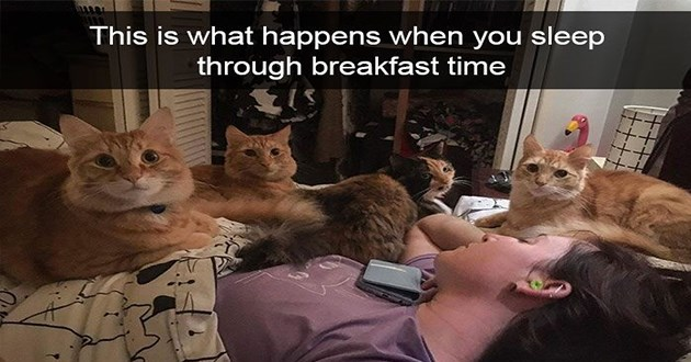 cats cute funny lol animals aww wholesome uplifting | This is happens sleep through breakfast time person lying in bed surrounded by four cats sitting all around and on top of her body