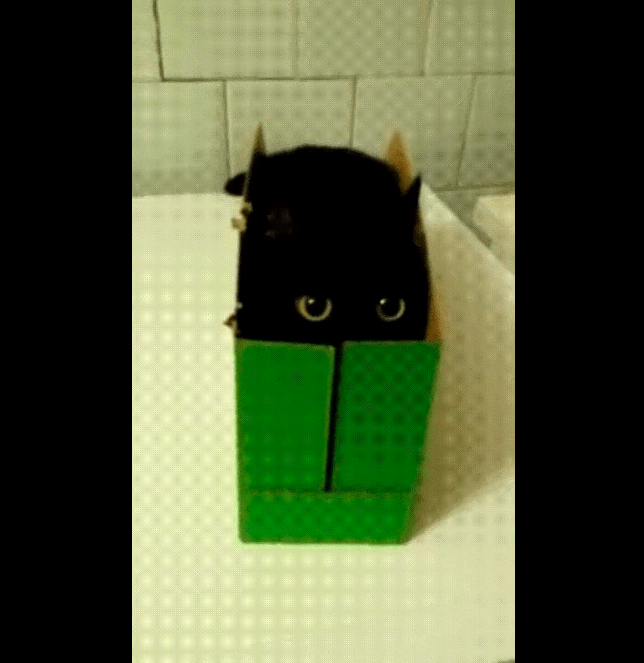 collection of the day's top voted top rated cat gifs black sitting inside a box completely blending with the darkness with only two round eyes visible from inside