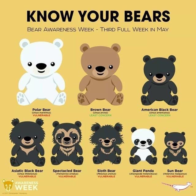 top infographics guides | Animal - KNOW BEARS BEAR AWARENESS WEEK THIRD FULL WEEK MAY Polar Bear Brown Bear (Ursus maritimus) VULNERABLE (Ursus arctos) LEAST CONCERN American Black Bear (Ursus americanus) LEAST CONCERN Asiatic Black Bear Spectacled Bear Sloth Bear Giant Panda Sun Bear (Ursus thibetanus) VULNERABLE (Tremarctos ornatus) VULNERABLE (Melursus ursinus) VULNERABLE CAluropoda melanoleuca) VULNERABLE CHelarctos malayanus) VULNERABLE AWARENESS WEEK TM 20 P en N